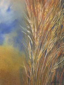 prairie-wheat-300dpi